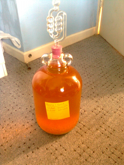 Photo of parsnip and carrot wine brewing